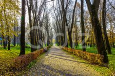 Qdiz Stock Photos | Autumn Scenery with Trunks of Trees and Bushes,  #alley #autumn #avenue #background #branch #colorful #day #environment #fallen #foliage #footpath #golden #grass #green #ground #landscape #lane #leaf #leaves #line #lush #multicolored #nature #nobody #outdoor #park #path #pathway #road #row #scenery #season #sky #sunlight #sunny #tranquil #tree #trunk #walkway #way #wood #yellow