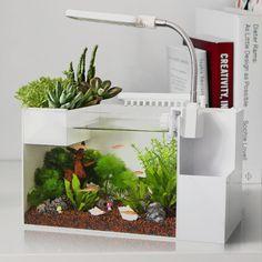aquarium tank desk organizer