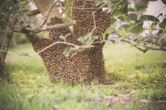 Bee, Photography, Honey Bees, Photograph, Photography Business, Bees, Photoshoot, Fotografie, Fotografia