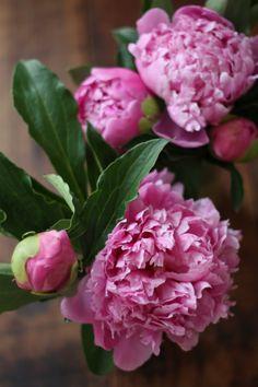 Pink Peonies by Asmodel