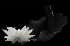 Black & White | Black & White | Bahman Farzad | Flickr
