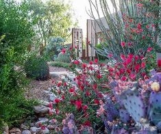 Use these woody plants to bring vibrant color to Southwest gardens.  Use these woody plants to bring vibrant color to Southwest gardens.
