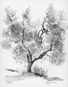 A lot of drawing was done before preparing to make etchings. In Florence, when etching was the main object of studies at Villa Schi- fanoia, fields or orchards and barns often became the subject. Olive trees instantly seemed to reveal 1001 mysteries: capturing light on silver leaves and then from  one moment to the other making spooky impressions when the sun disappeared behind a cloud.   En français: un olivier est un sujet très difficile à capter, à cause de la lumière changeante sur les…