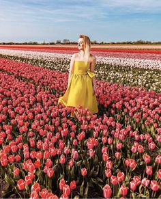 Travel Around The World, Around The Worlds, Places To Travel, Tulips, Fields, Amsterdam, Buckets, Spring, Amazing
