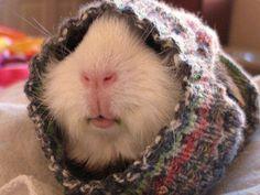 Mützen für Hunde - warme Hundekleidung für den Winter  - http://freshideen.com/haustiere/mutzen-fur-hunde-hundekleidung.html