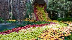 Apples at the Bellagio, Las Vegas   Photo by by Jim Mantock