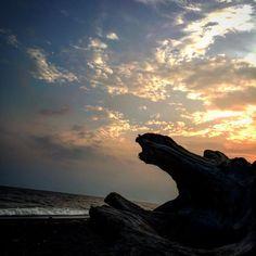 #茅ヶ崎#湘南#sunset#Driftwood#sea#shonansnap