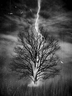 Lightning strikes, tree, clouds, beauty of Nature, thunder storm, beautiful, solitude, alone, stars, photo b/w.