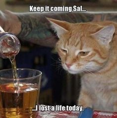 Keep It coming Sal...I Lost A Life Today cat lol kitty humor funny pictures funny memes funny pics funny images funny animal pictures funny animal memes really funny pictures funny pictures and images