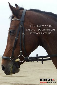 What future are you creating? dressage riding horse quote #BRLequine #fromponyclubtorolex #horsetraining #ridinglessons #Dressage #3dayeventing #browbandbling