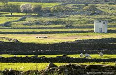 Countryside @ Paros island !!! Paros Island, Countryside, Mountains, Nature, Travel, Naturaleza, Viajes, Trips, Off Grid