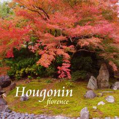 Hougonin