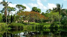 Flora from 6 continents can be found across Mounts Botanical Gardens' 14 acres, located in West Palm Beach. Plant sales (held 3 times per year) draw gardening enthusiasts from around the region.