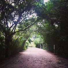 O Bosque da Barra da Tijuca é um parque municipal com áreas de lazer e passeio, além de reserva ecológica, onde estão preservadas a vegetação natural das áreas originais da Barra da Tijuca e animais que originalmente habitavam o espaço.