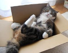 Новости про животных: Почему кошки любят коробки?