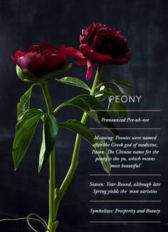 Flower Glossary | Design Sponge @something good