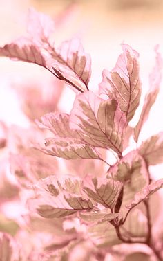 ~Pink Autumn Day~
