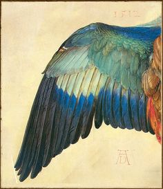 Albrecht Dürer 'Wing of a European Roller' (modified) 1512 Watercolor and Gouache on Vellum// I love anything to do with feathers & wings Albrecht Durer, Art And Illustration, Phenix Tattoo, Art Amour, Inspiration Art, Art Design, Bird Art, Love Art, Painting & Drawing