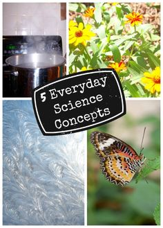 5 everyday science concepts that kids can understand!  Plus easy ideas for hands-on ways to explain them.