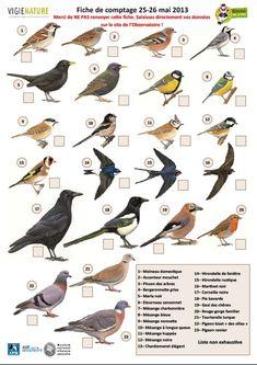 Ficha de Aves. Material didactico.
