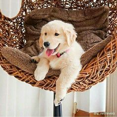 """Puppy: """"I Love Hammock Living - My 'Human' is SO Loving And Giving..."""" (Short Poem Written By: Lynn Chateau © )"""