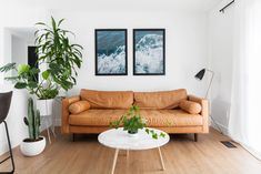 Modern living room with caramel-hued sofa and potted greenery