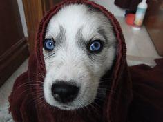 Those Blue Eyes http://ift.tt/2ipbyOr