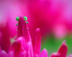 Una libélula fotografiada escondida tras el pétalo de una flor en un campo de Rumania (Remus Tiplea, 2014)