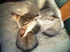 Kitteh kisses.