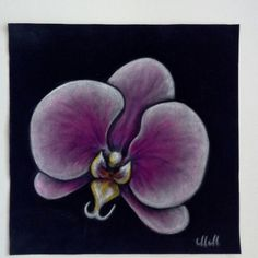 Orchid on black velour - beautiful decoration for your home.