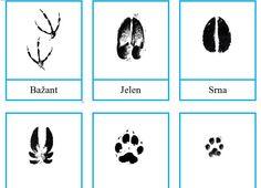 Animal Tracks, Science For Kids, Survival Skills, Montessori, Cards, Apple, Winter, Cute Little Drawings, School