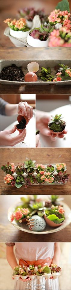 "Mini plants in eggshell. I started to do this with red peppers and it has been working fine. I think now I'm gonna move to the ""succulents"". :)"
