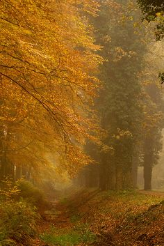 """Overijssel, Netherlands.  """"Everyone must take time to sit and watch the leaves turn."""" * explore * by dewollewei, via Flickr"""