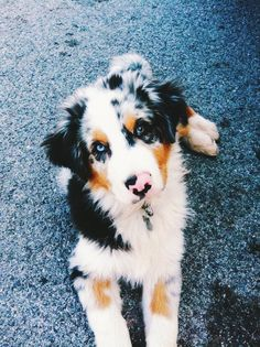 Super Cute Puppies, Cute Little Puppies, Cute Dogs And Puppies, Doggies, Pretty Animals, Cute Funny Animals, Cute Baby Animals, Cute Dog Photos, Cute Animal Pictures