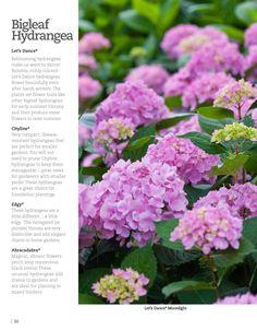 Proven Winners Gardening Simplified 2013