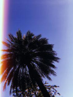 #summer #palm #relax #chill #verano
