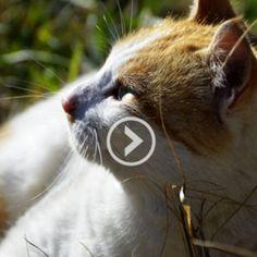 Vidéos - Fondation 30 Millions d'Amis