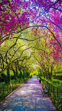 Spring.. Central Park, New York City; so inviting...)