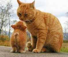 Kiss from mama....