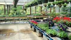 a visit to my favorite nursery ,Willey's near Smyrna DE , always puts me in a good mood