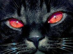 Красные глаза *-*