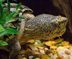 Raise a little shell. Tremendous turtles.
