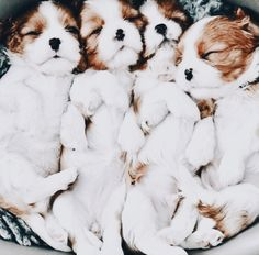 a puddle of pups