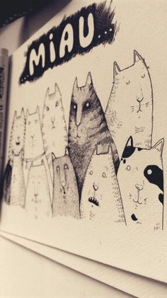 Cats cats cats everywhere!