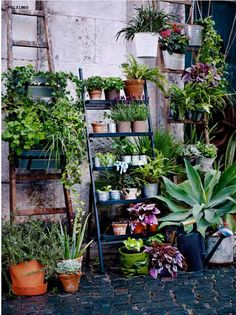 Poppytalk: Green Thumb Meets Concrete Jungle | New Summer Pots from IKEA / The SALLADSKÅ outdoor plant stand ladder. A nice vertical piece for holding herbs and smaller pots. Made of galvanized steel and plastic and designed by Carl Hagerling. $59.99