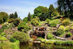 Tur til Botanisk hage når det blomstrer ✅