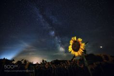 Il mitico girasole!  Image credit: http://ift.tt/29RTObi Visit http://ift.tt/1qPHad3 and read how to see the #MilkyWay  #Galaxy #Stars #Nightscape #Astrophotography