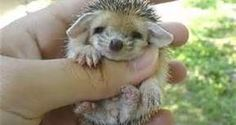 foster cat with baby hedgehogs - Bing Images