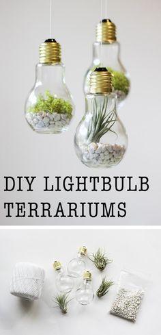 activite manuelle, comemnt créer un terrarium dans une ampoule électrique, gravier drainage et plantes, idées créatives