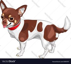 color sketch of the cute dog Chihuahua breed smiling. Download a Free Preview or High Quality Adobe Illustrator Ai, EPS, PDF and High Resolution JPEG versions.